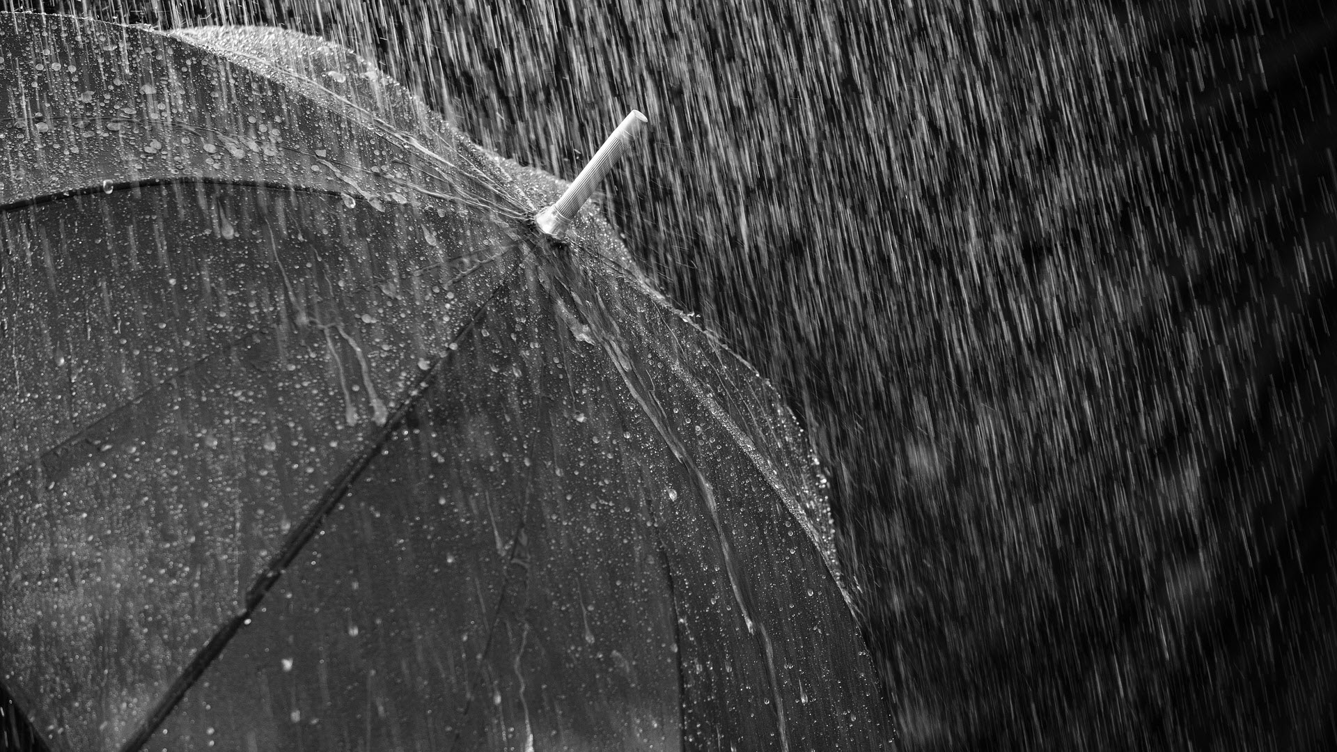 Download Free Rain Wallpapers I M A Pluviophile