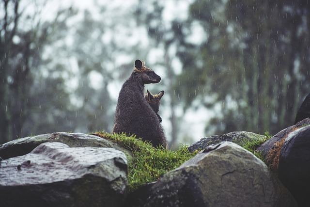 rain affect on animals